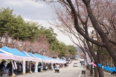 신한대학교, '제 3회 빛 벚 축제' 개최