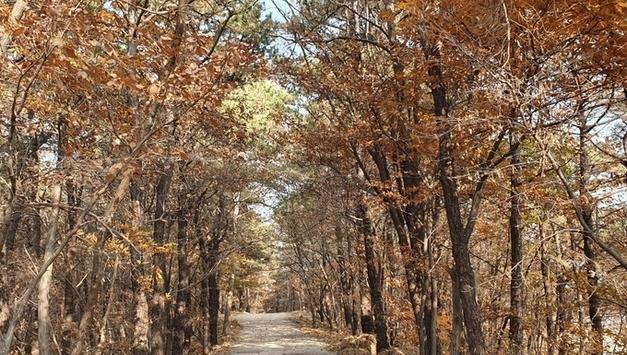 의정부시, 숲길 환경 정비 지속 추진
