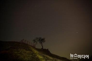 [포토줌인] 솔(松)과 별 #1