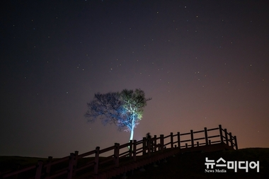 [포토줌인] 솔(松)과 별 #4