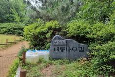 부평구, 만월산 배롱나무길을 '부개산 배롱나무길'로